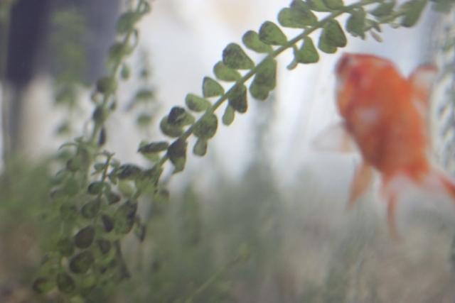 Croydon Clinic Fish Tank